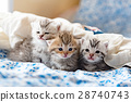 Kittens on the bed 28740743