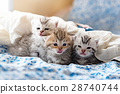 Kittens on the bed 28740744