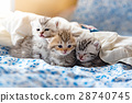 Kittens on the bed 28740745
