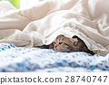 Kittens on the bed 28740747