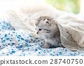 床 毯子 蓬松的 28740750