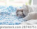 床 毯子 蓬松的 28740751