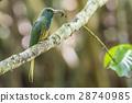 bee-eater birds bird 28740985