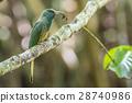 bee-eater birds bird 28740986