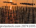 Shellfish and fish farm in sea 28741095
