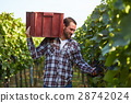 Farmer with crate of grapes 28742024