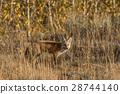 Red Fox 28744140