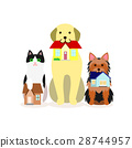 animal, animals, dog 28744957