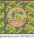 葡萄 綠色 綠 28746214