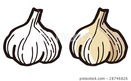 Garlic 28746826