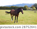 Horse standing alone at the farm 28752641