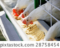 White chicken feed 28758454