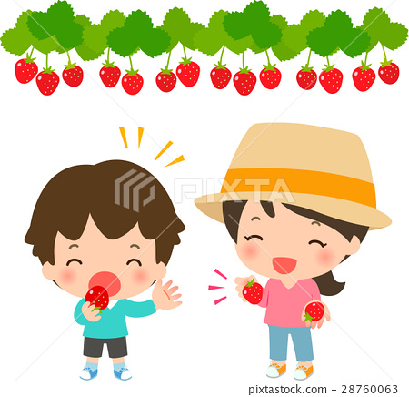 strawberry picking, strawberries, strawberry 28760063
