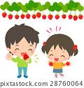 strawberry, picking, strawberries 28760064