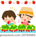 strawberry, picking, strawberries 28760065