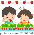 strawberry, picking, strawberries 28760066