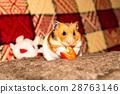 Cute tiny hamster 28763146