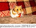 Cute tiny hamster 28763147