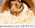 Cute tiny hamster 28763153