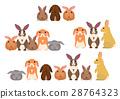 动物 兔 兔子 28764323