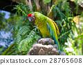 鹦鹉 绿色 鸟儿 28765608