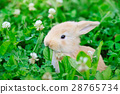 Little rabbit on green grass 28765734