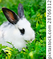 Baby white rabbit on grass 28766312