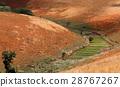 madagascar, field, hill 28767267