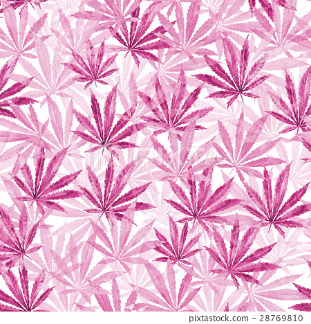 Purple, violet Cannabis leaves on white background 28769810