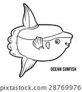 Coloring book, Ocean sunfish 28769976