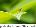 insects on leaf in green background 28770546