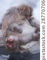 지고 쿠 다니 야생 원숭이 공 원의 스노우 몽키 28770706