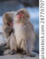 地獄谷野猿公苑 地獄谷公園 猴子 28770707