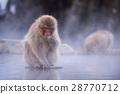 지고 쿠 다니 야생 원숭이 공 원의 스노우 몽키 28770712