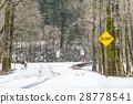 pine, tree, area 28778541