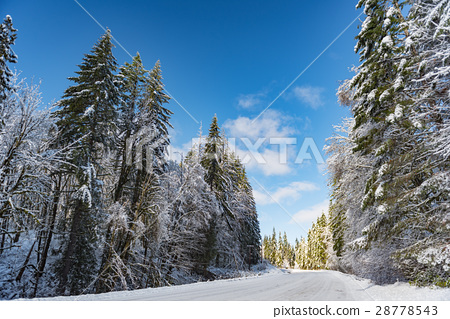 Winter route in forest in Oregon 28778543