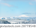 forest, conifer, snow 28778548