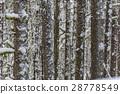 forest wood season 28778549