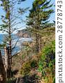 High scotch firs growing on rock 28778743
