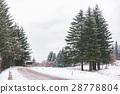 pine, tree, through-passage 28778804