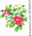 唾液 山茶花 植物 28780937
