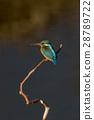 翠鳥 鳥兒 鳥 28789722