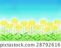 유채 꽃밭 28792616