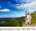 Monkeys at the Gorges viewpoint. Mauritius. 28792745