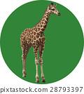 giraffa, giraffe, animal 28793397