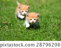动物 猫 猫咪 28796206