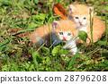 动物 猫 猫咪 28796208