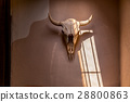 Bison skull on adobe wall 28800863