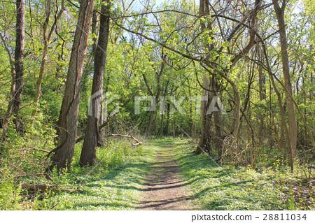 숲의 오솔길 미국에서 28811034