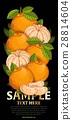 水果 混合 树叶 28814604